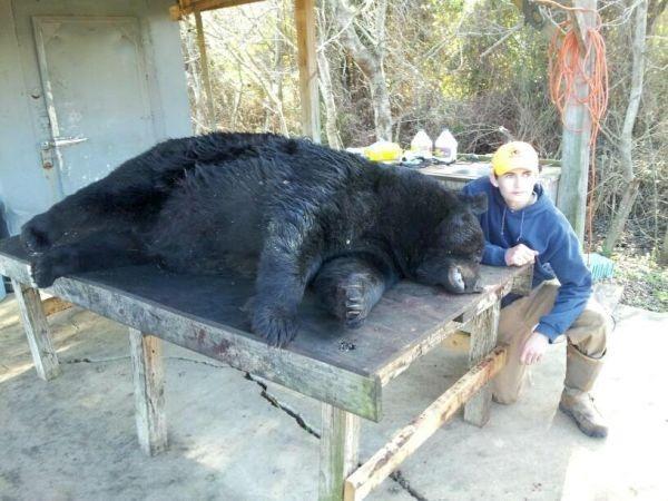 honeycutt-bear-287.jpg